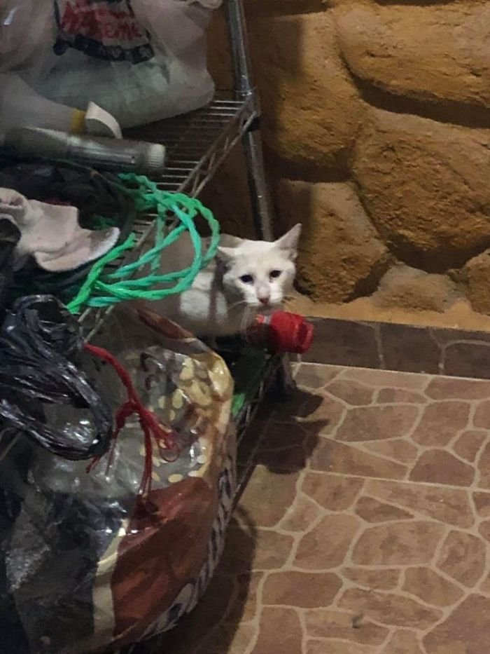 people find stranger cats in their houses 5efc8475d38c9 700