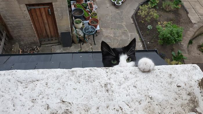 people find stranger cats in their houses 5efc8486f0637 700