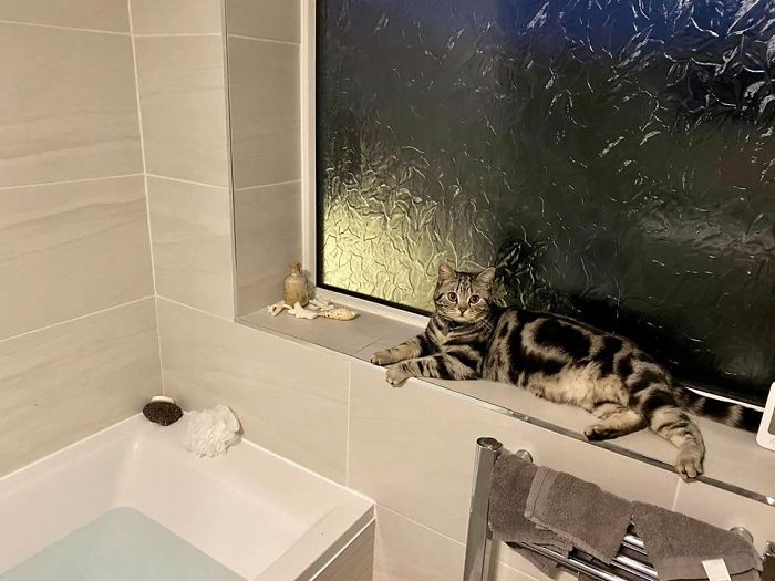 people find stranger cats in their houses 9 5efc766ac8b56 700