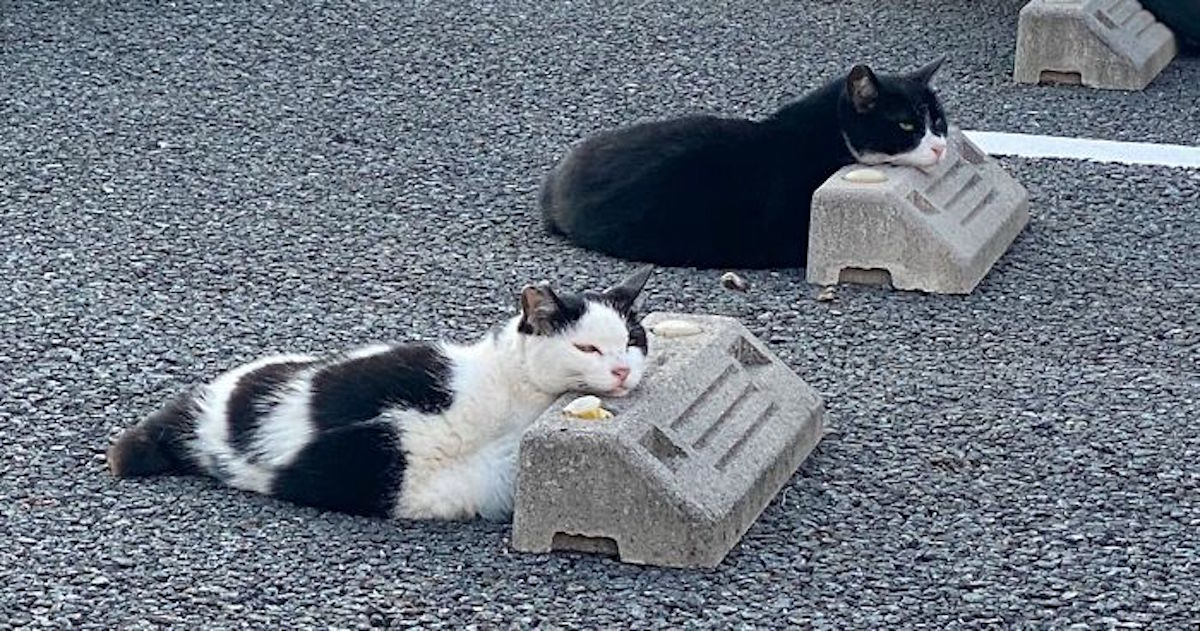 cats sleeping parking lot curves fb png 700
