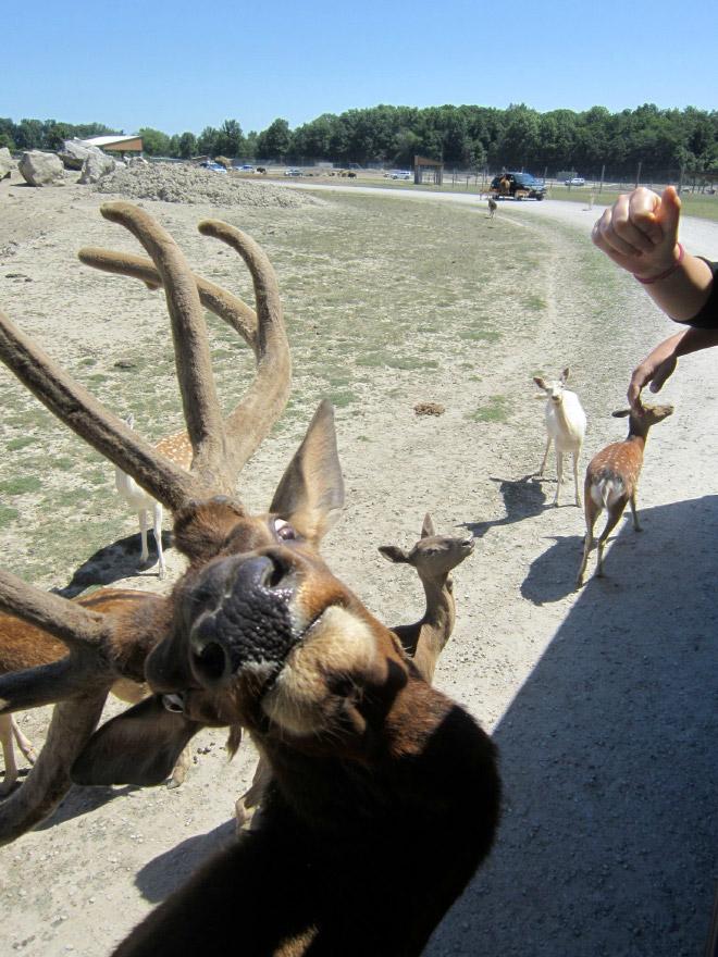 failed wildlife photos15