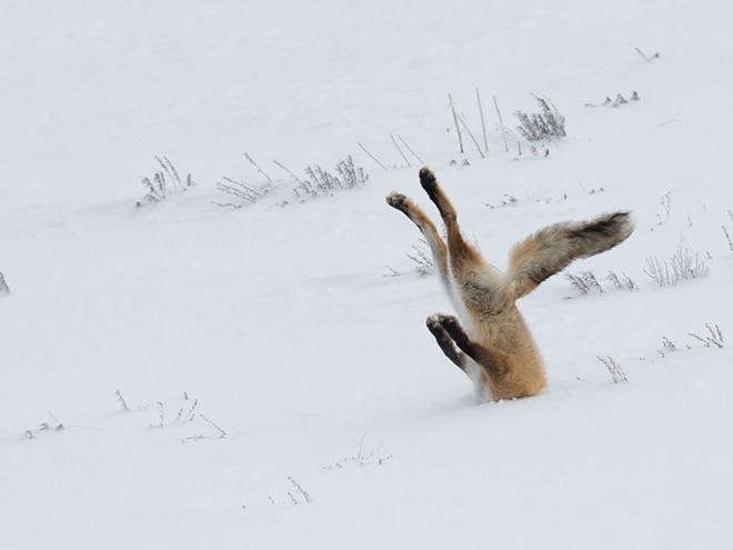 failed wildlife photos2