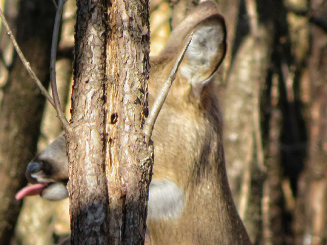failed wildlife photos7
