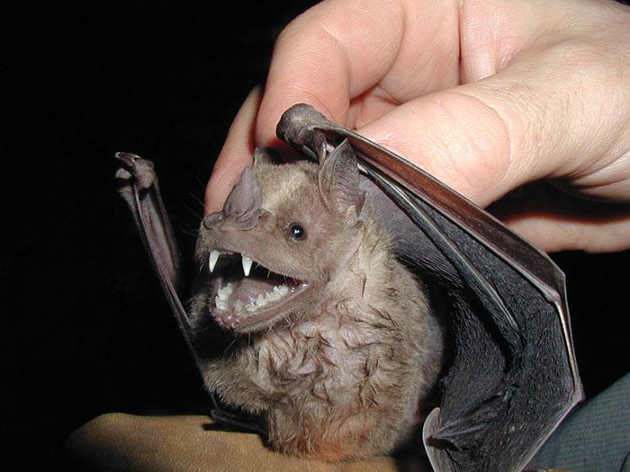 strange species of bats 5f06e80fc3a88 700