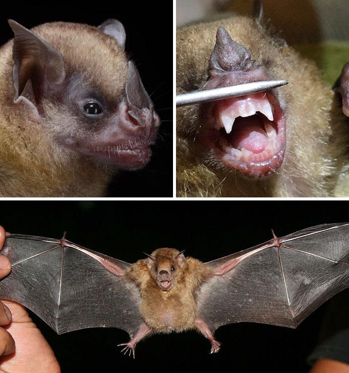 strange species of bats 5f06fafa8ca86 700