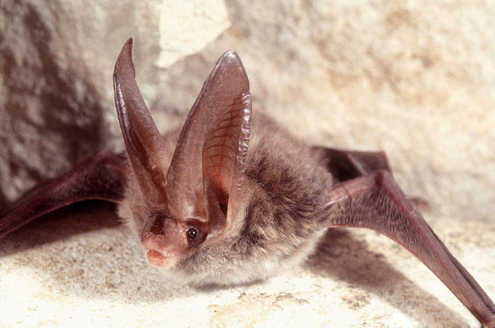 strange species of bats 5f06fe51bb604 700
