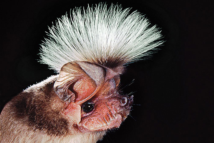 strange species of bats 5f07026f1c7e9 700