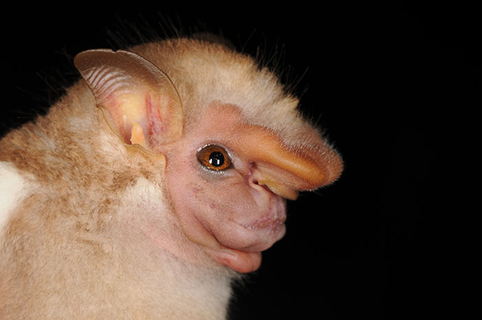 strange species of bats 5f071b17b75c0 700