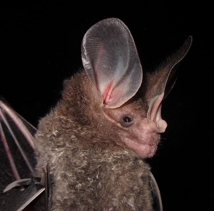 strange species of bats 5f16f89f74562 700