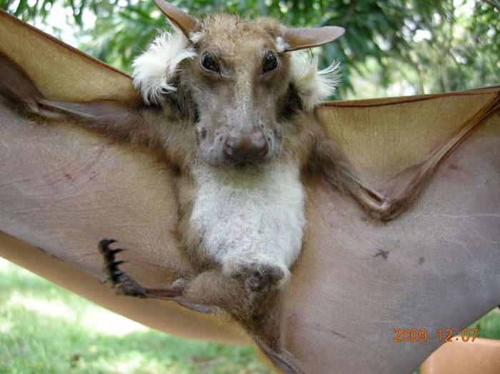 strange species of bats 5f1850001f996 700
