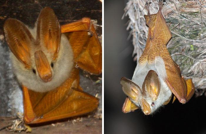 strange species of bats 5f1851bc8bcb8 700
