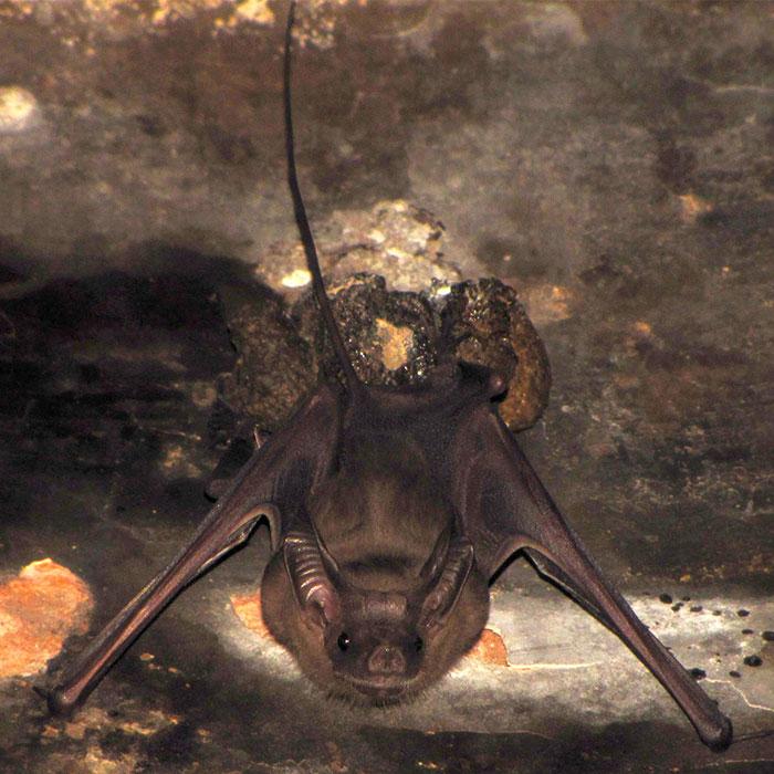 strange species of bats 5f18529c4c13f 700