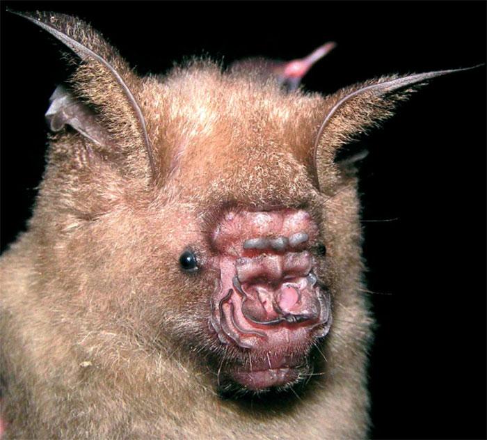 strange species of bats 5f19466836613 700
