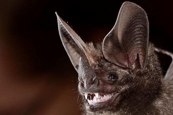 strange species of bats 5f194c01a77cc 700