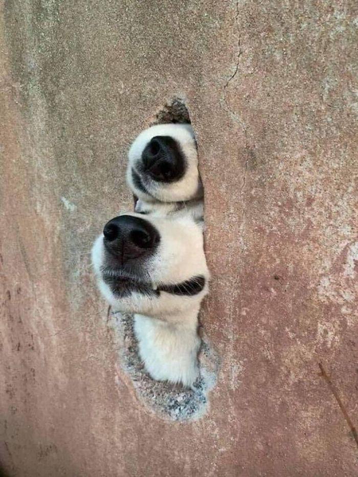 funny cute dog spotting pics 5f4cde708f051 700