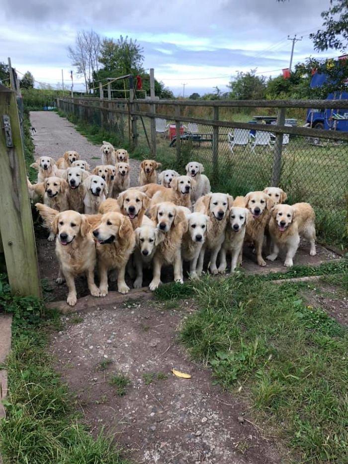 funny cute dog spotting pics 5f4ce177c0e44 700