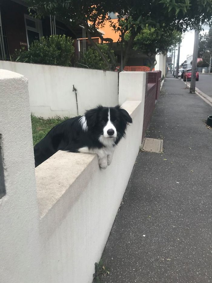 funny cute dog spotting pics 5f4ce6cb62cca 700