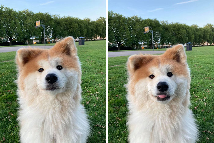 funny cute dog spotting pics 5f4ce7cbc84f6 700