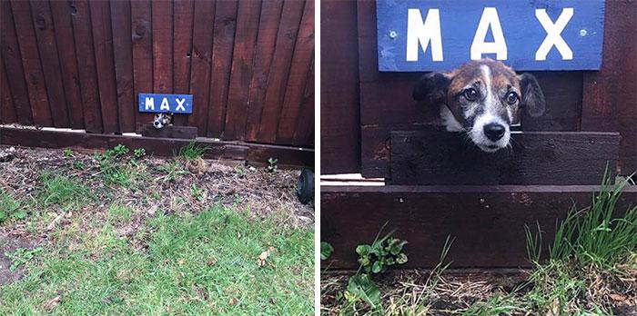 funny cute dog spotting pics 5f4cf71844506 700