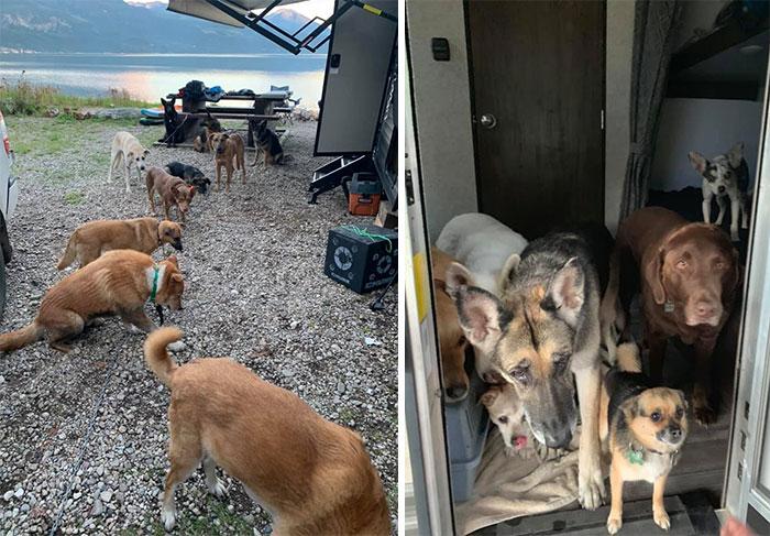 funny cute dog spotting pics 5f4cf8563088f 700