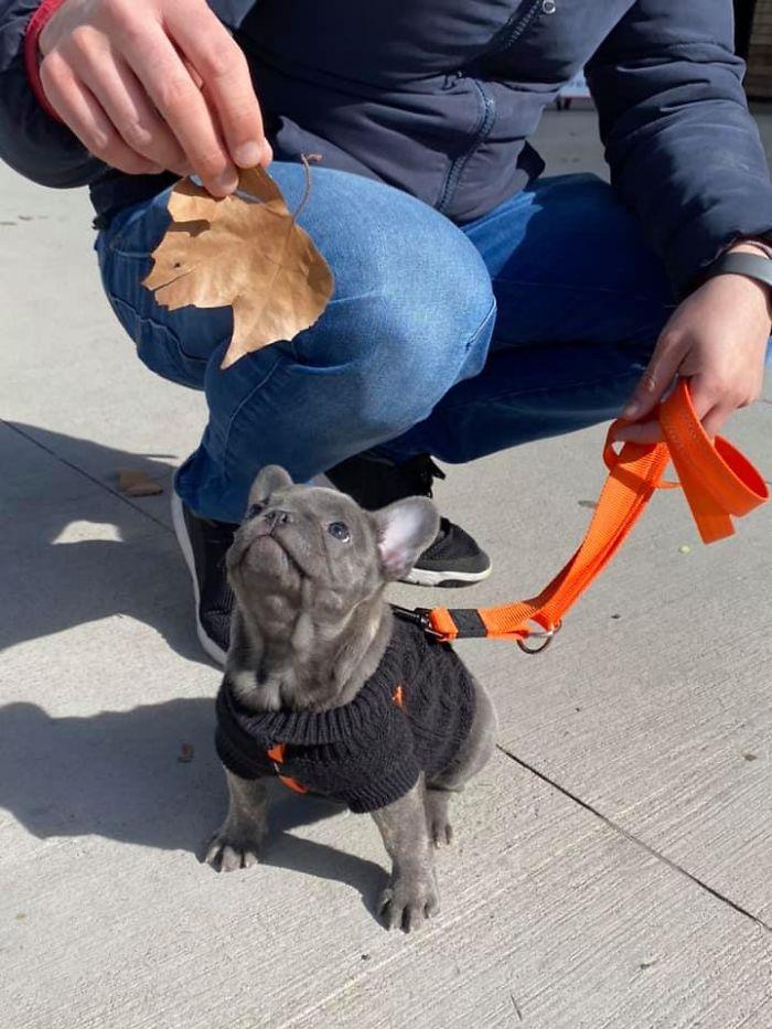 funny cute dog spotting pics 5f4cf9522bea3 700
