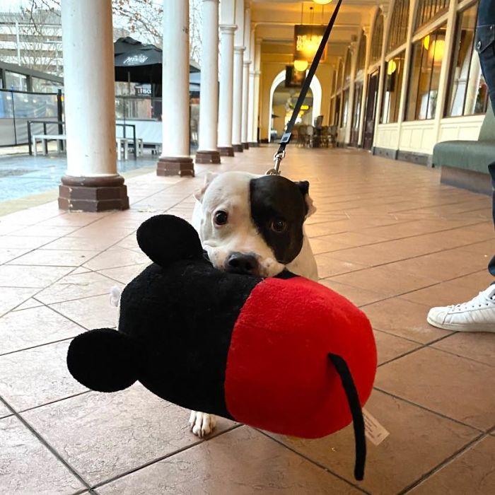 funny cute dog spotting pics 5f4cfd66a8f23 700