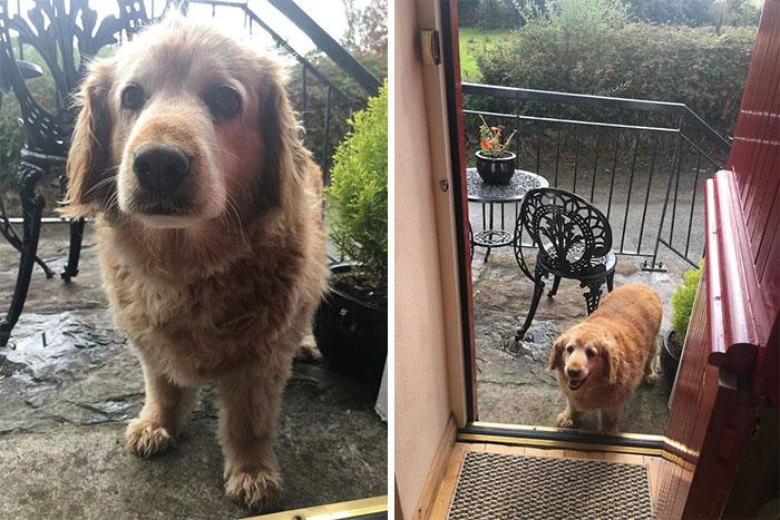 funny cute dog spotting pics 5f4cff1af1de5 700