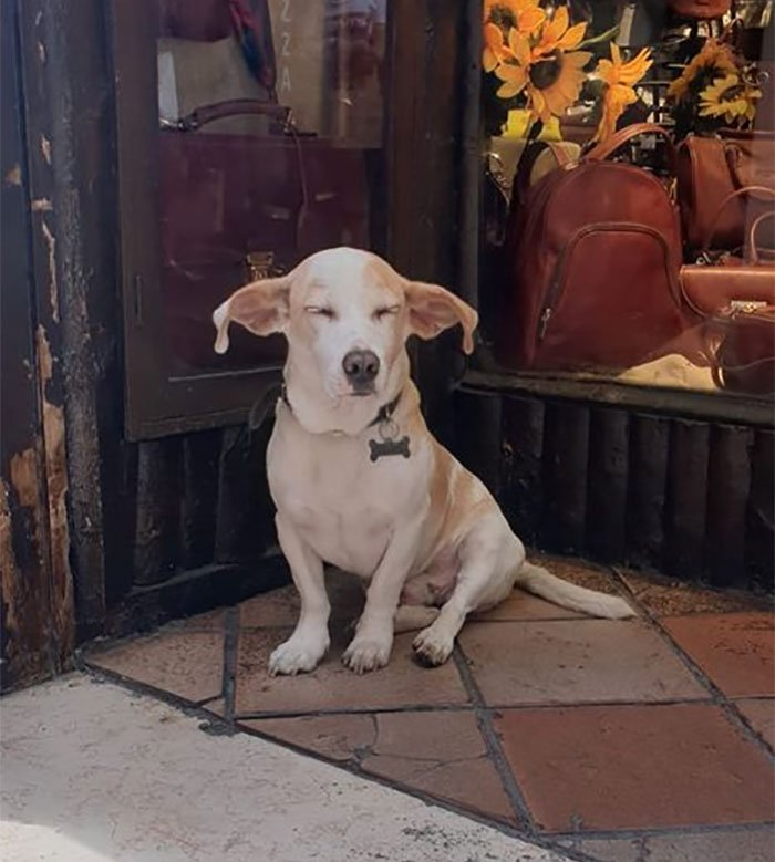 funny cute dog spotting pics 5f4d004400466 700