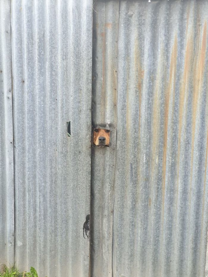 funny cute dog spotting pics 5f4d034133b5a 700
