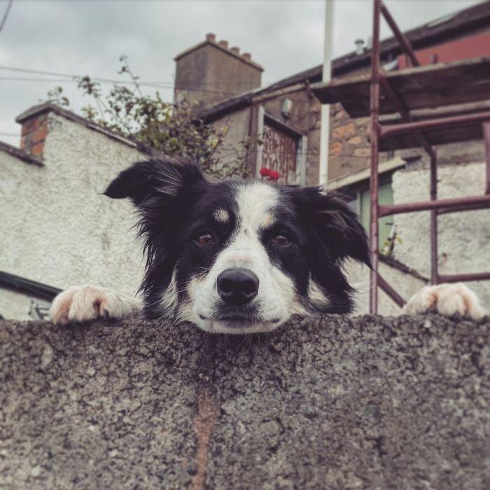 funny cute dog spotting pics 5f4d050d27eb1 700